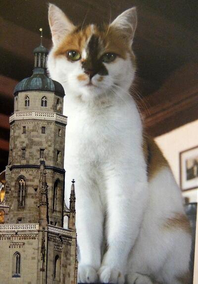 ネルトリンゲンの猫のポストカード