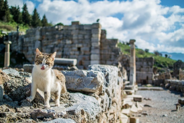 数千年に渡る人々の暮らしや歴史を刻む「エフェスの古代都市遺跡」