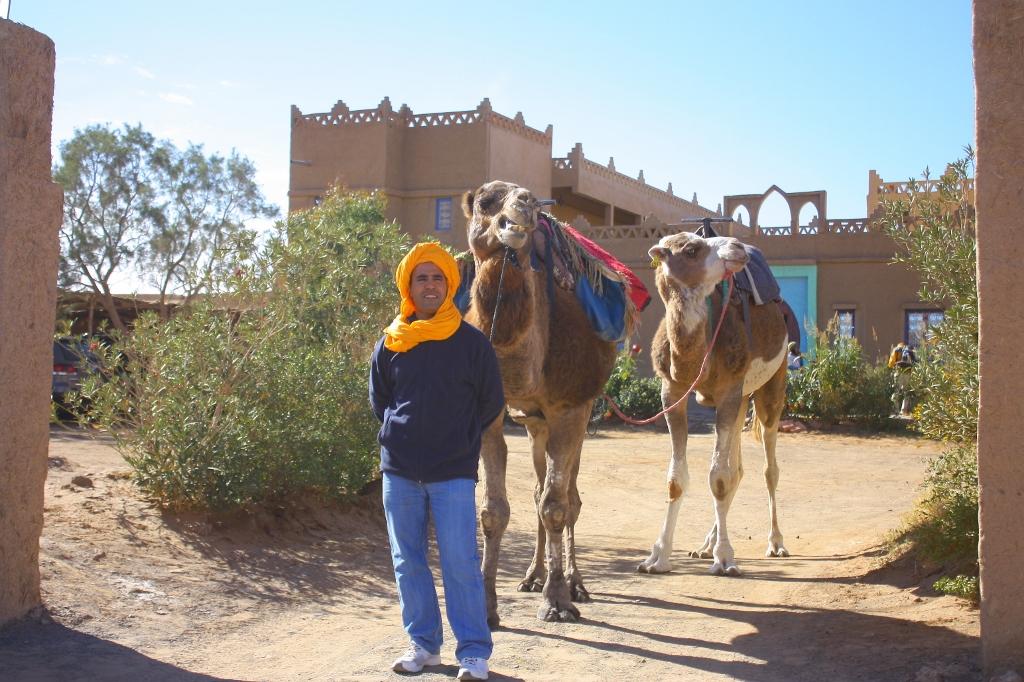 サハラ砂漠ツアーのラクダの画像です。