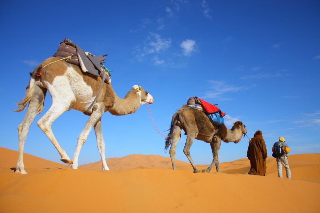 地球の神秘!ラクダで渡るサハラ砂漠1泊ツアーを体験しよう