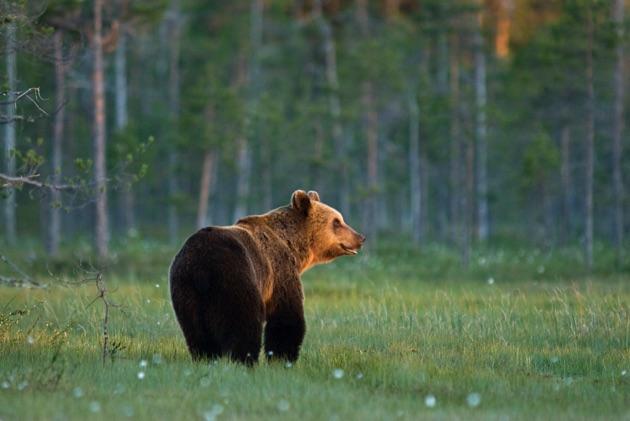 リラ国立公園の野生動物