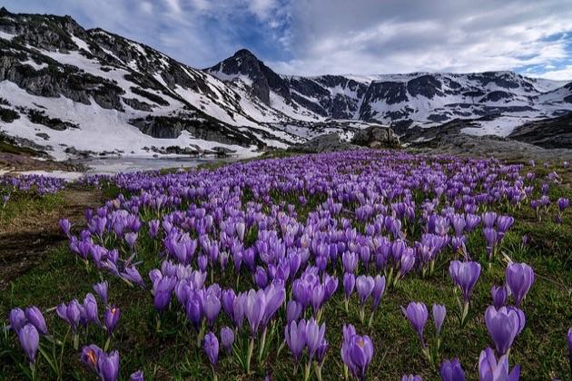 リラ国立公園の春