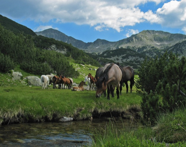 リラ国立公園の馬