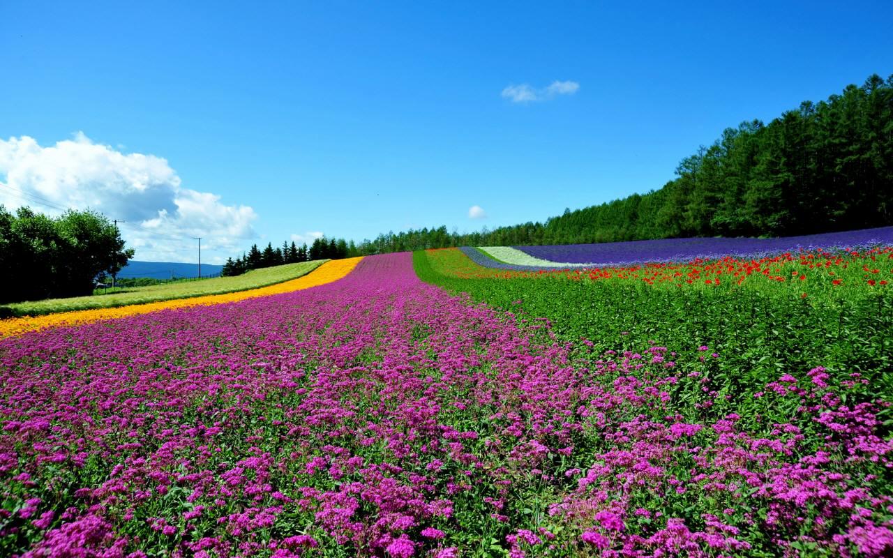 北海道「ファーム富田」
