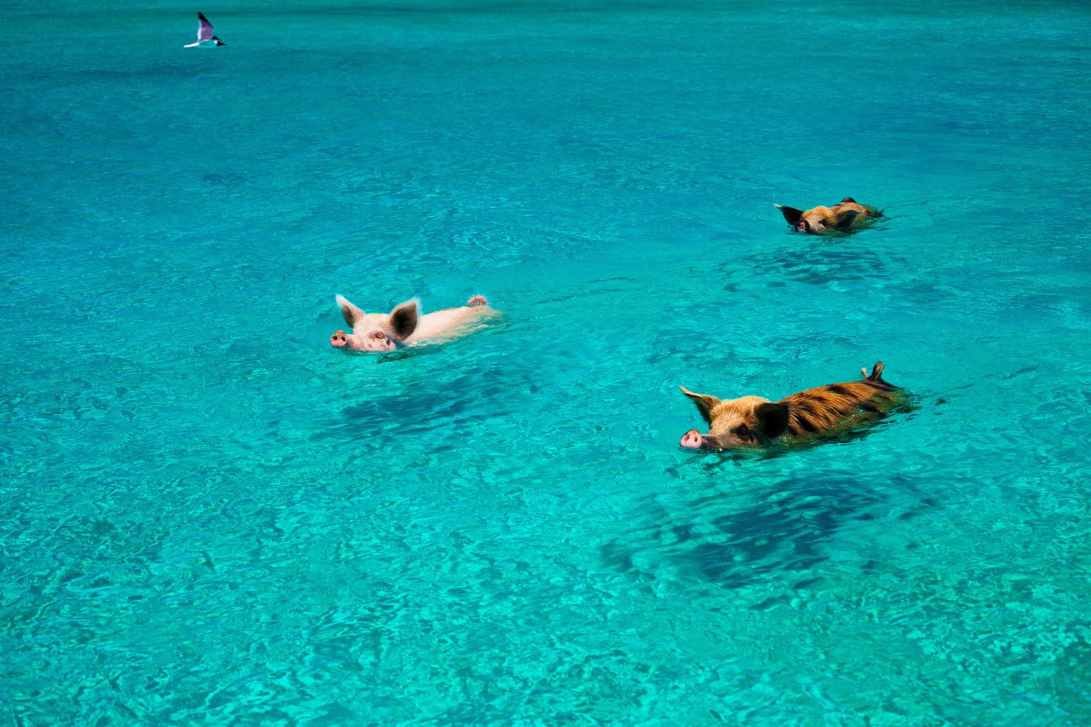 一度は行ってみたい!世界の不思議で美しいビーチ10選