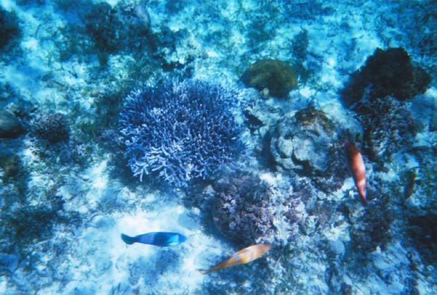 ヒルトゥガン島の海洋保護区サンクチュアリの水中写真