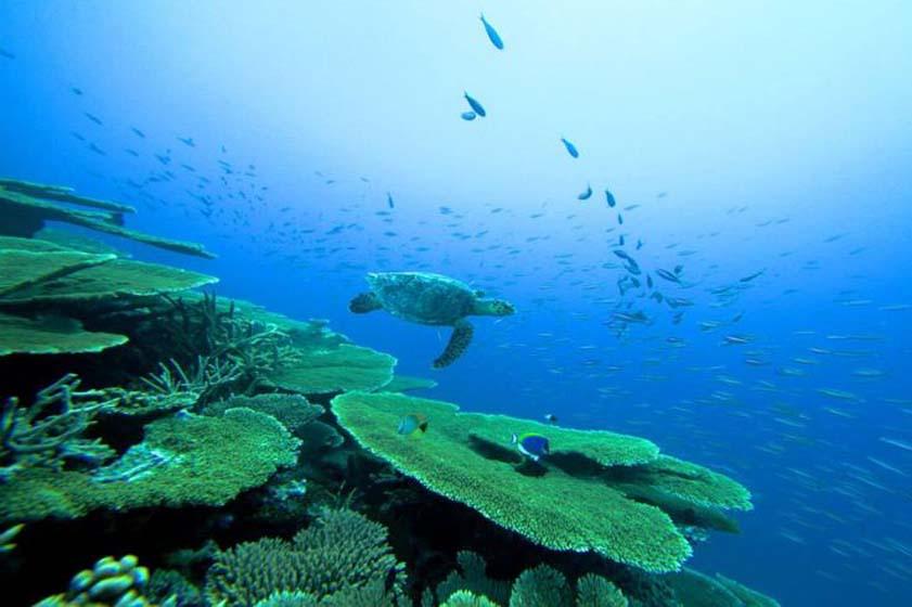 モルディヴの海で出会うウミガメ