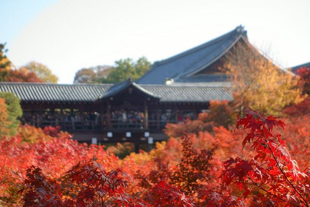 年2回限定!京都屈指の紅葉名所「天得院」の特別拝観が本日より開始