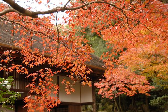 秋だけの特別な風景!完全予約制の美しき庭園「修学院離宮」