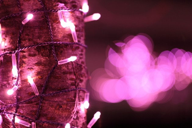 今年の目黒川はピンクに染まる「冬の桜」が11月20日から登場♪