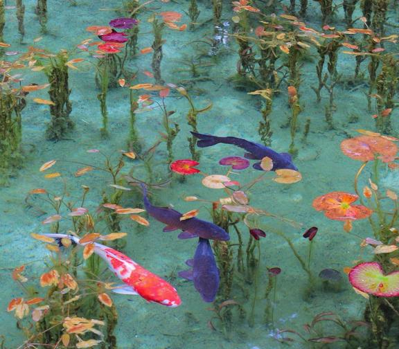 話題沸騰中!まるで絵画のような美しすぎる岐阜の「モネの池」