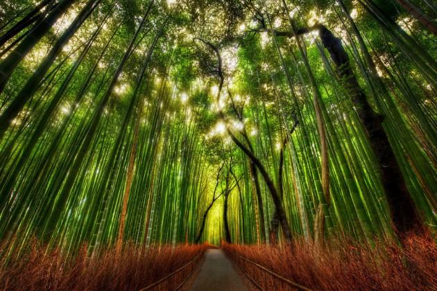 京都・竹林