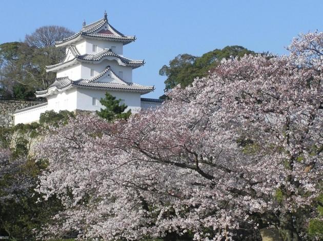 明石城・桜