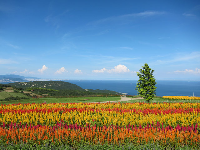 ようこそ花の島へ!淡路島の観光スポットおすすめランキング