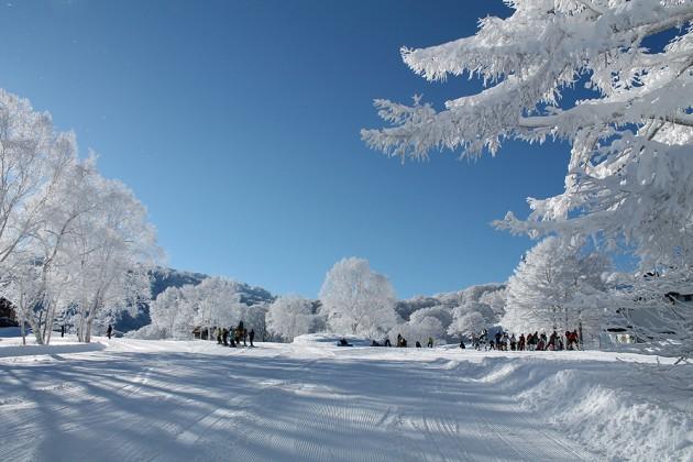 今年のスノーシーズンは長野で決まり!長野県のスキー場おすすめランキング