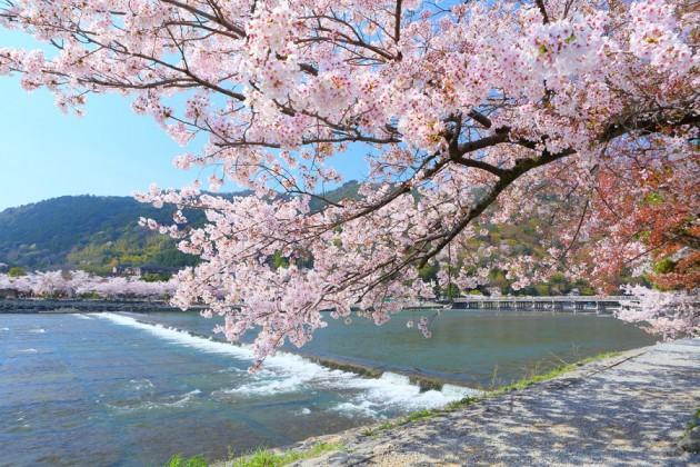 京都・渡月橋・春
