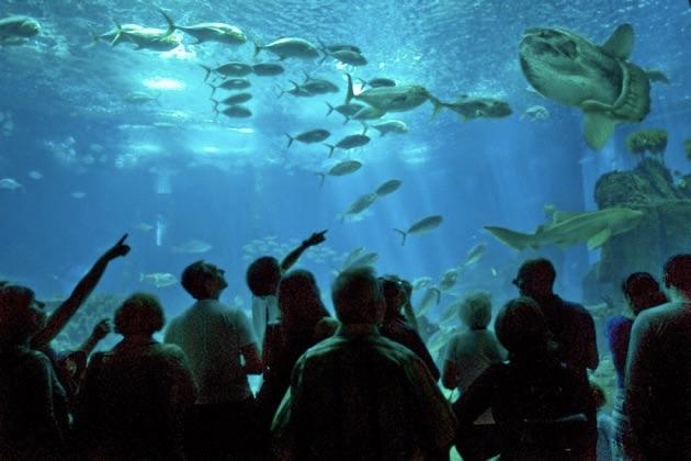 リスボン海洋水族館の水槽