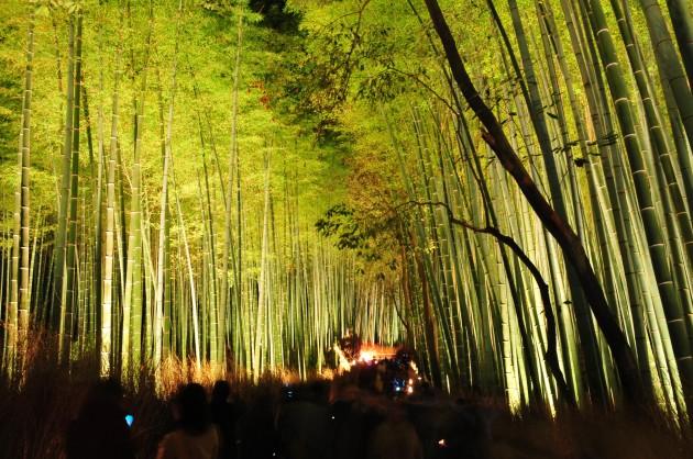 京都竹林01