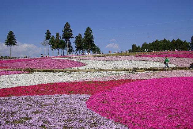 見どころ満載「埼玉県」の観光スポットおすすめランキング