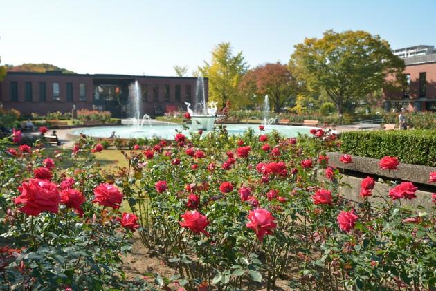 石橋文化センターのバラ