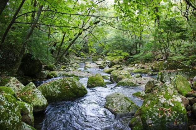 清流の森川