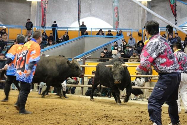 宇和島闘牛
