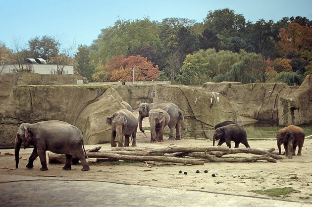 ケルン動物園ぞう