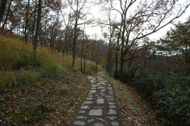 清流の森遊歩道
