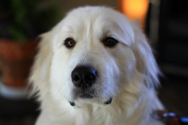 心のリゾート海の別邸ふる川:看板犬モコちゃん
