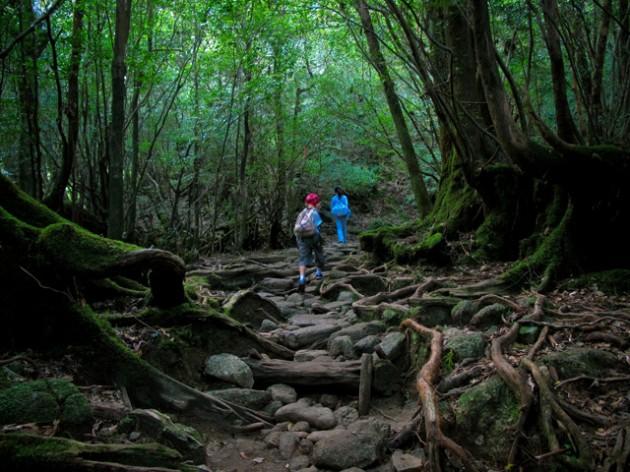 神の宿る大自然を楽しむ「屋久島」登山のおすすめコース5選