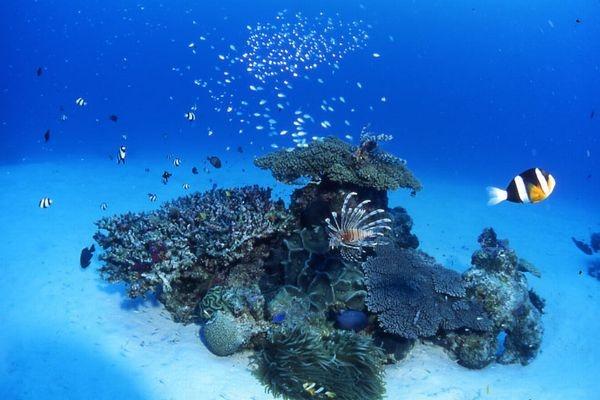 momokaサンゴ礁1