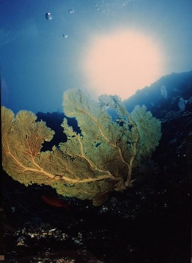momokaiサンゴ礁2