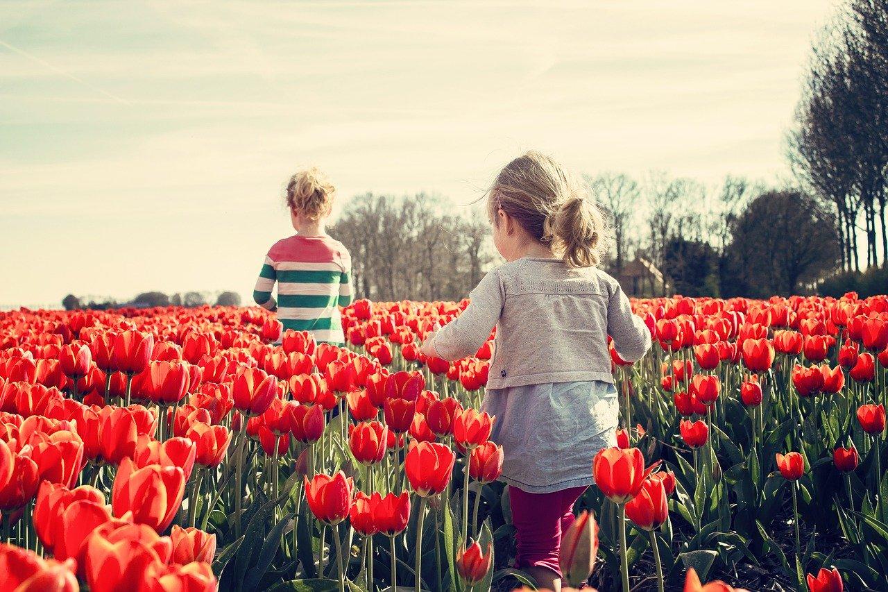 子育て世代から見るオランダでの現地生活あれこれ